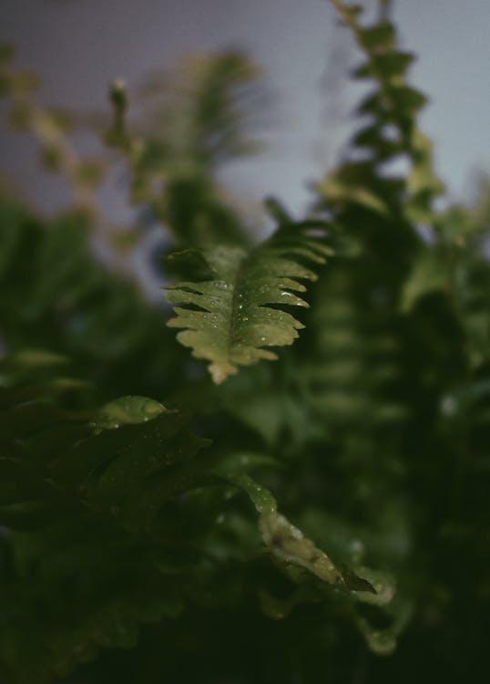 foglie di felce, foglie verdi, sfocatura