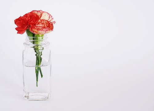Minimalist Photography of Red-petaled Flower on Clear Glass Vase