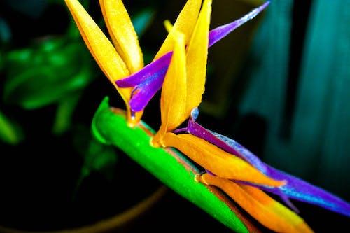 Darmowe zdjęcie z galerii z sztuczne kwiaty