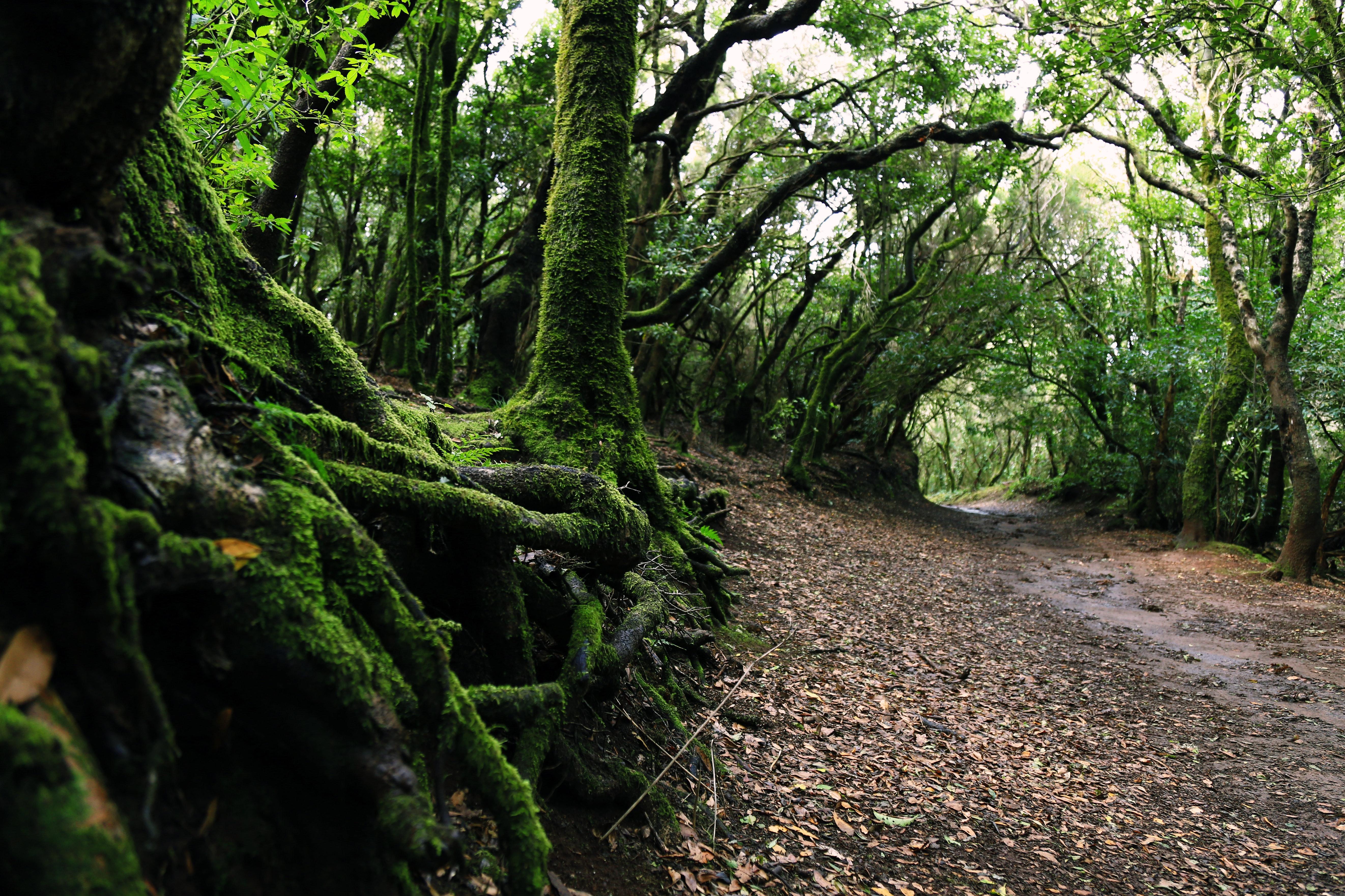 Green Tree Near Green Plants 183 Free Stock Photo