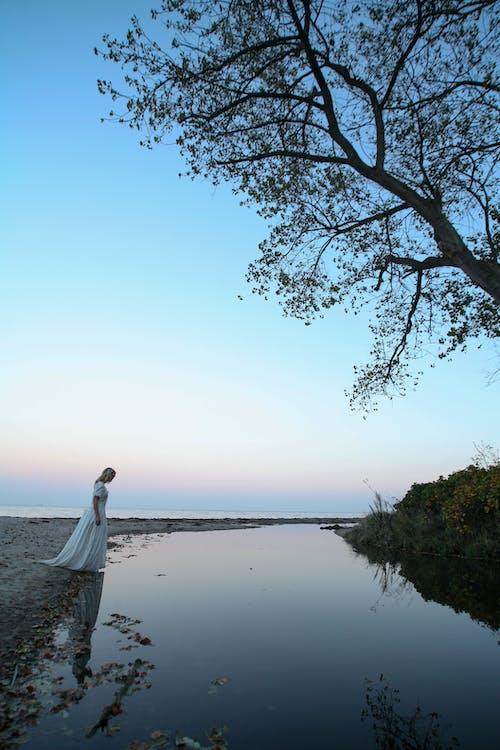 Ingyenes stockfotó ég, esés, fa, fehér ruha témában