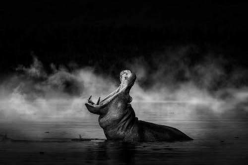 Бесплатное стоковое фото с вода, движение, дикая природа, Искусство