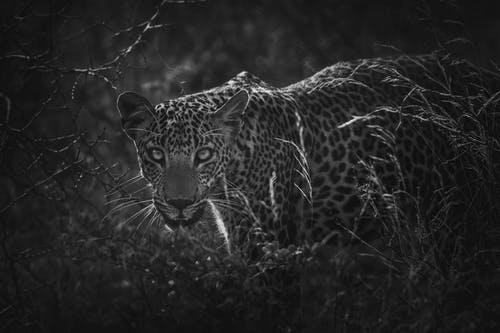 Бесплатное стоковое фото с большой, джунгли, дикая природа, дикий
