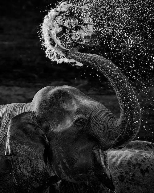 Бесплатное стоковое фото с influencer, большой, вода, вымирающие виды