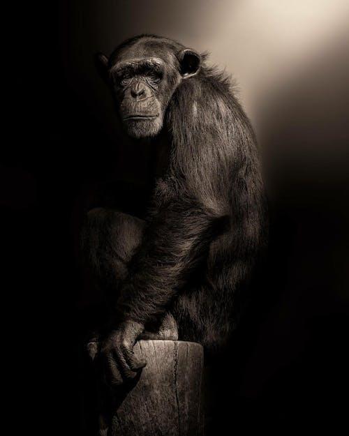 Бесплатное стоковое фото с глаз, джунгли, дикая природа, животное
