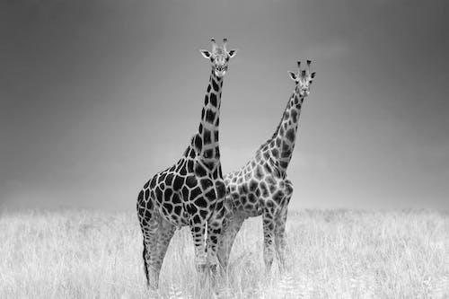 Бесплатное стоковое фото с варварский, высокий, дикая природа, дикий