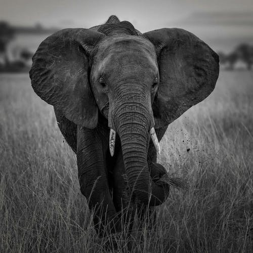 Бесплатное стоковое фото с африканский слон, дикая природа, животное, зоопарк