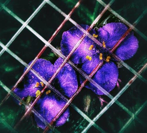 Fotobanka sbezplatnými fotkami na tému #bokeh, #fence, #flowerportrait, #flowers