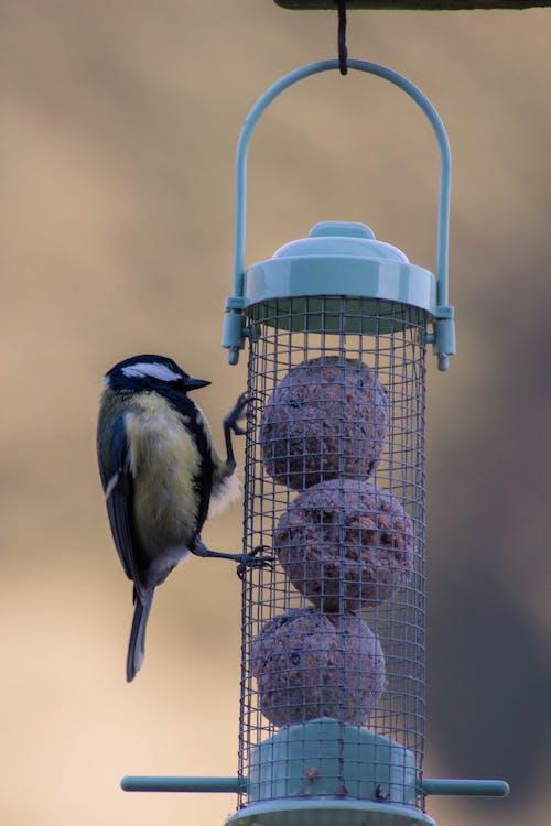 スコットランド, バードウォッチング, 鳥, 鳥の餌箱の無料の写真素材
