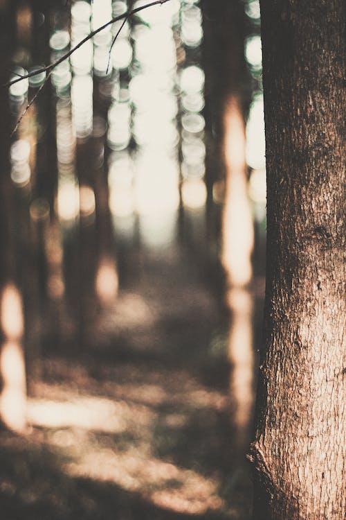 Kostnadsfri bild av bokeh, brun, dagsljus, dagtid