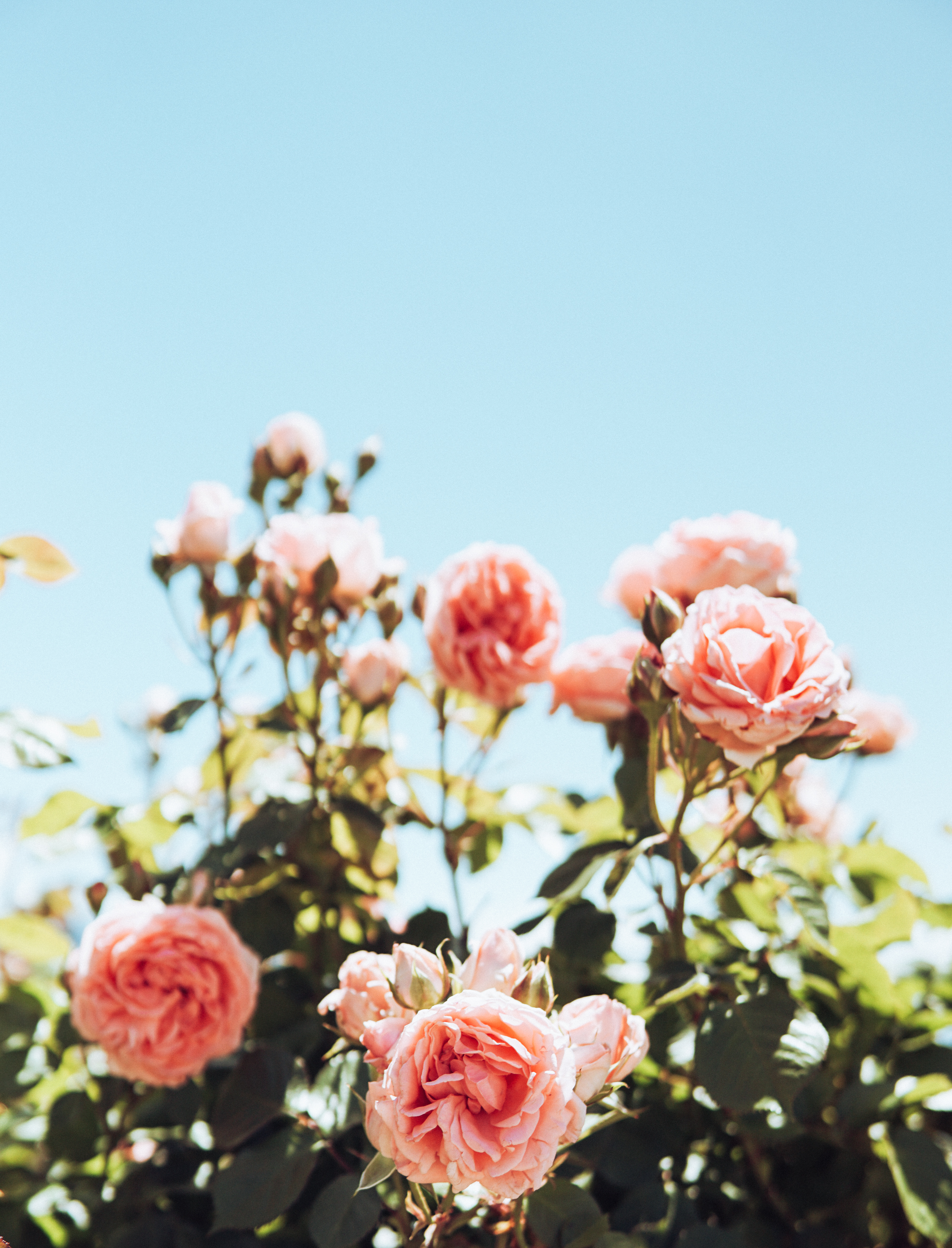 Photo of Pink and White Flowers