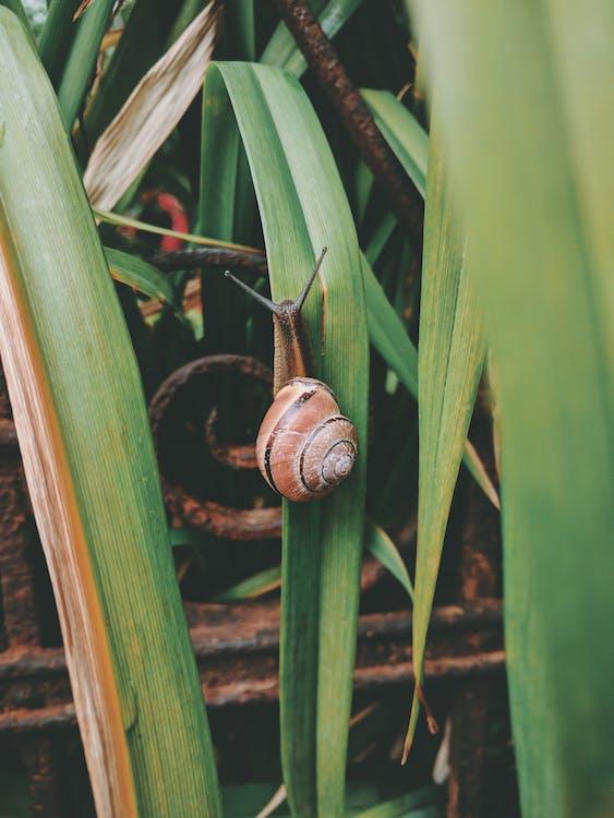 Snail on Grass
