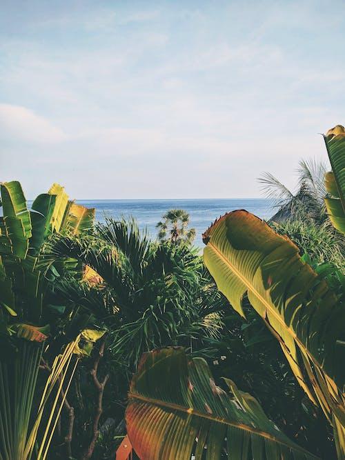 Gratis stockfoto met bananenbladeren, bladeren, blauw, blauwe lucht