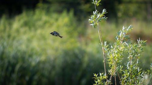 Ảnh lưu trữ miễn phí về bước nhảy vọt, cây, chim, danh lam thắng cảnh