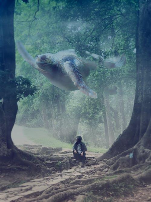 大樹, 巨龜 的 免費圖庫相片