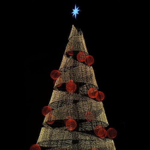 Gratis stockfoto met beroemdheid, fel, kerstboom, Kerstmis
