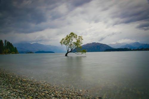 ağaç, bulutlar, dağlar, göl içeren Ücretsiz stok fotoğraf
