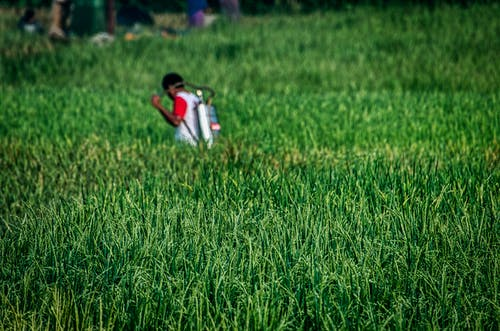 Fotos de stock gratuitas de afuera, agricultor, agricultura, al aire libre