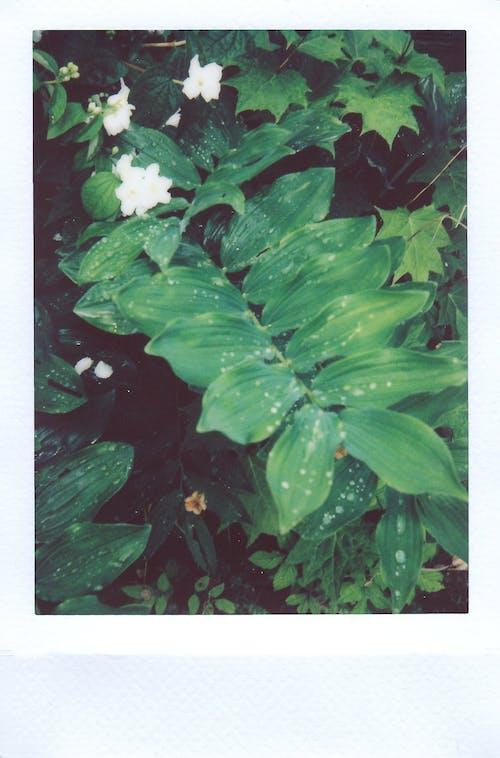 Kostnadsfri bild av flora, gröna löv, löv, stilleben