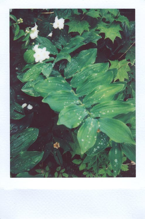 Green Leaf Plant Close-up Photography