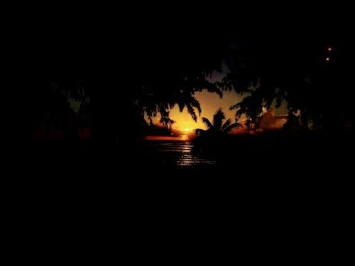 Foto d'estoc gratuïta de capvespre, color taronja, palmeres, sol daurat