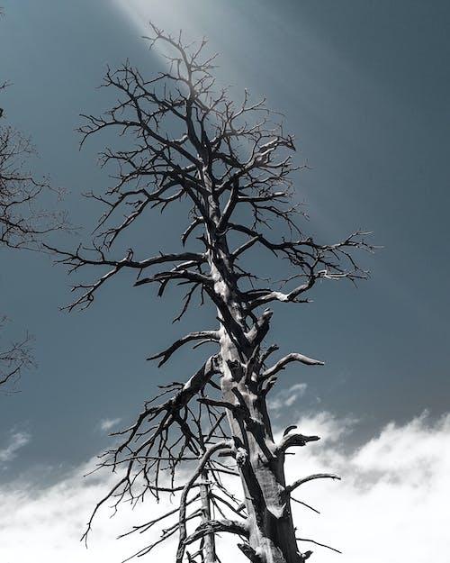 Darmowe zdjęcie z galerii z drzewo, gałęzie, jesień, nagie drzewo
