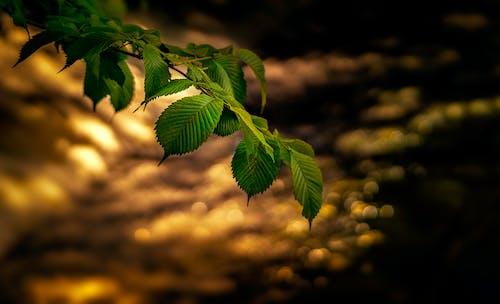 Ilmainen kuvapankkikuva tunnisteilla eristynyt, lehvät, luonto, puun oksa