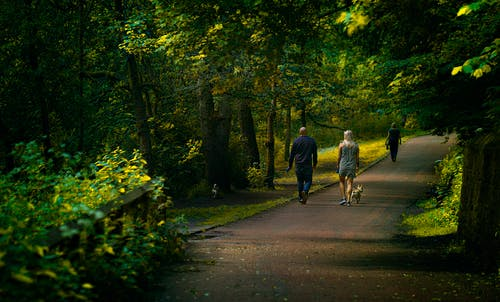 Photo of People Walking on Street Surrounded by Trees