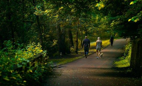 Fotobanka sbezplatnými fotkami na tému cesta, chodník, chôdza, dláždená cestička