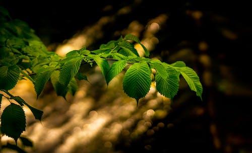 Kostenloses Stock Foto zu blätter, makro, pflanze