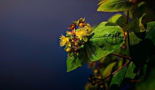 Бесплатное стоковое фото с завод, лист, максросъемка, цветок