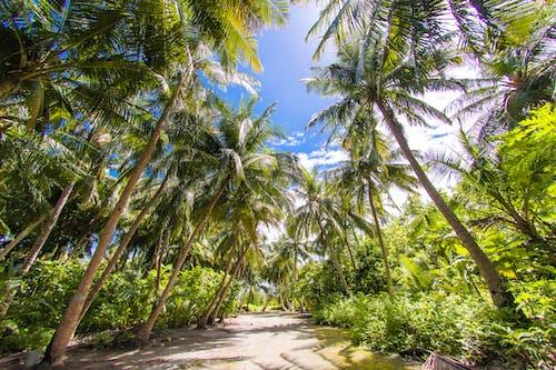 Free stock photo of Asad Photo, Asad's Photography, beach island, honeymoon