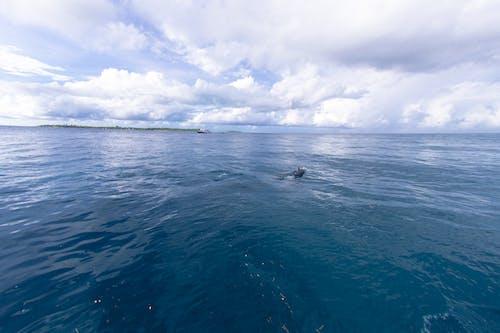 Free stock photo of Asad Photo, Asad's Photography, beach island, dolphin