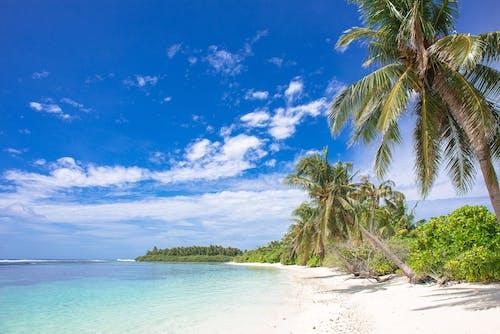 Immagine gratuita di acqua, alberi, alberi di cocco, bagnasciuga