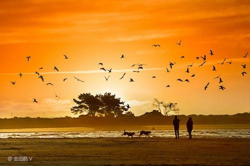 Birds Flying over Beach during Sunset