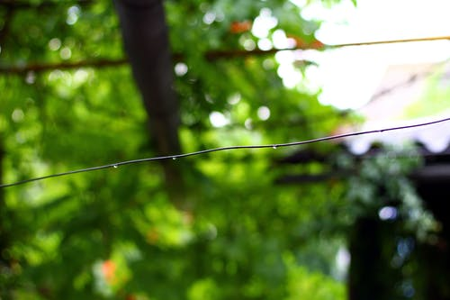 Fotobanka sbezplatnými fotkami na tému drôt, kvapky, listy, po daždi