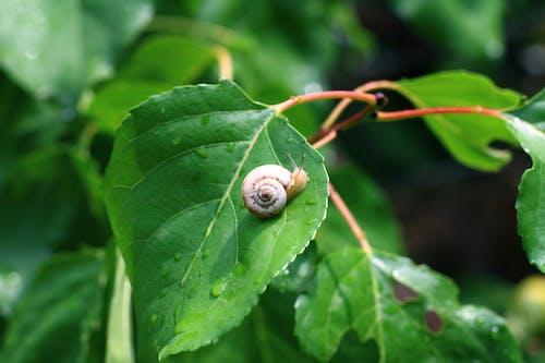 Foto profissional grátis de árvore, caracol, caramujo, folha