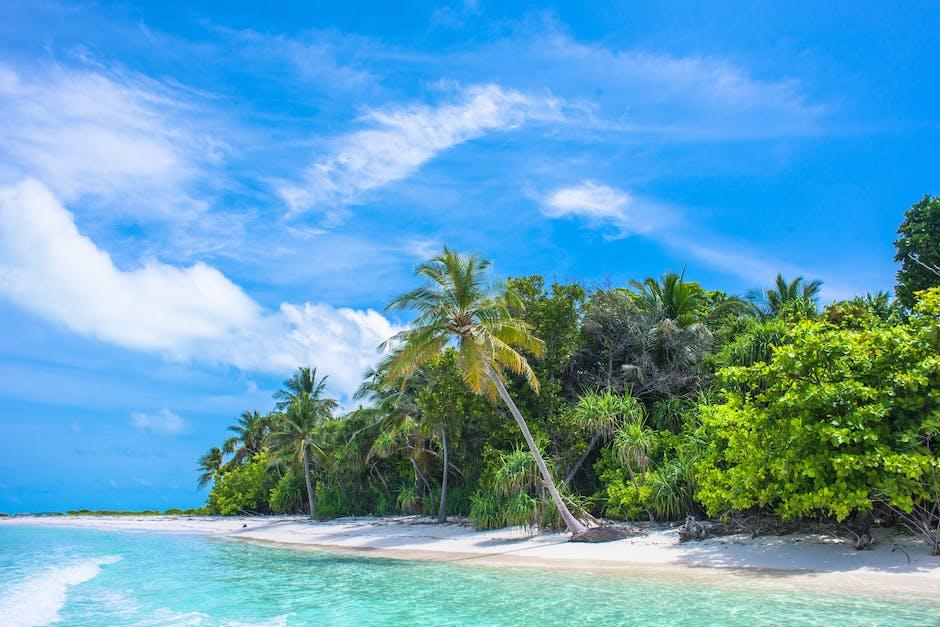 Palm tree near body of water