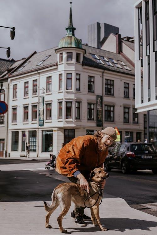 Foto d'estoc gratuïta de acariciant, arquitectura, caní, carrer