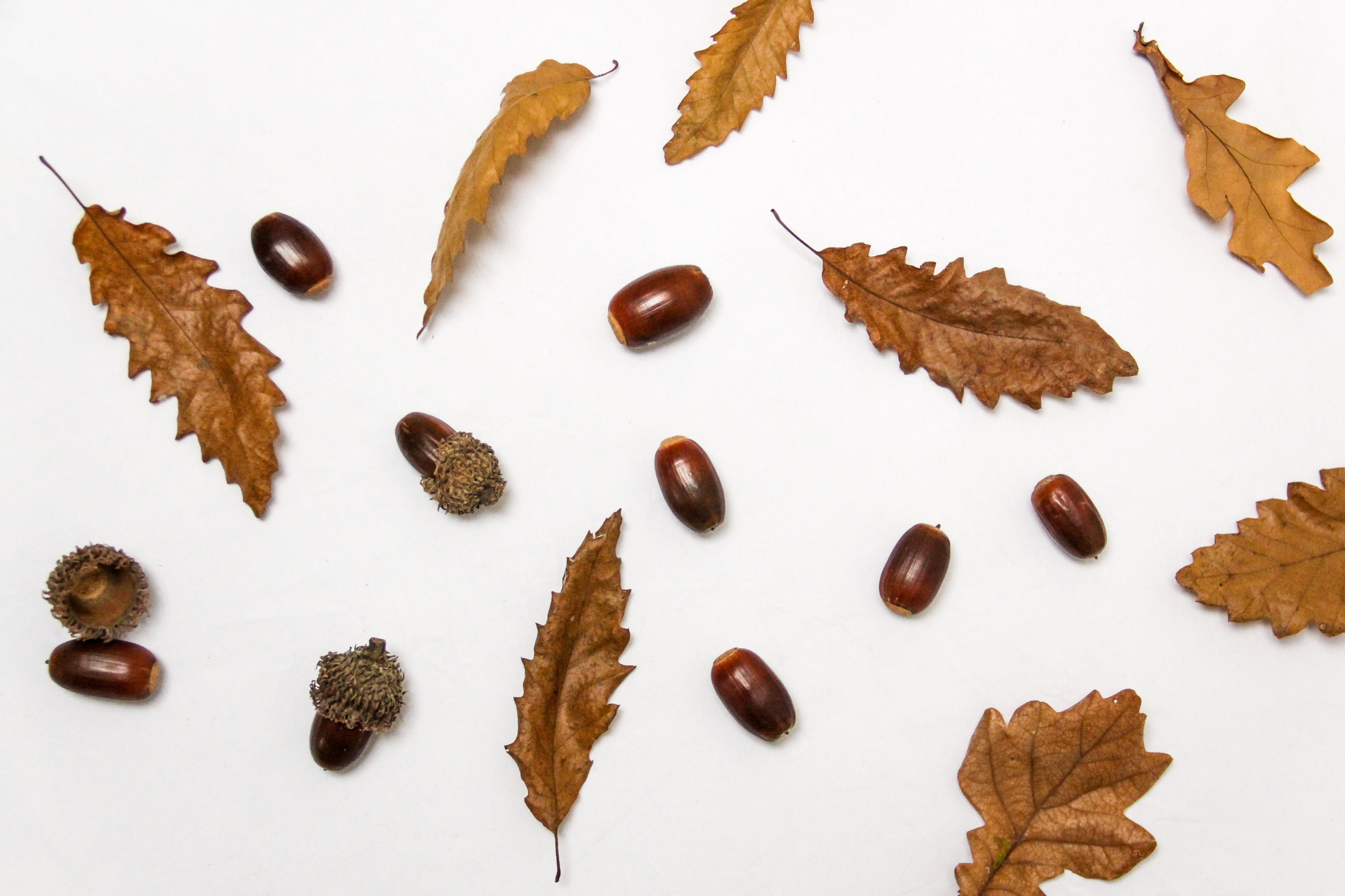 Close-up of Autumn Leaves over White Background