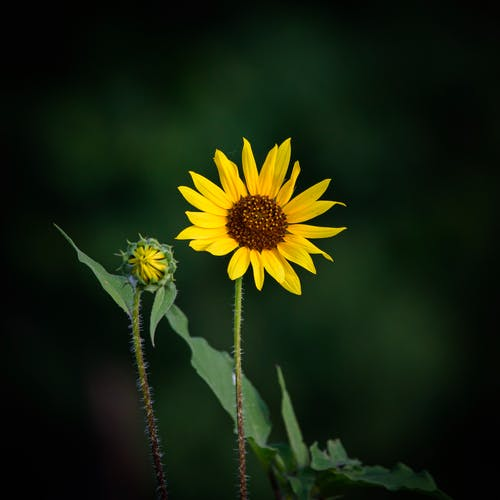 Selective Focus Photography Of Flower