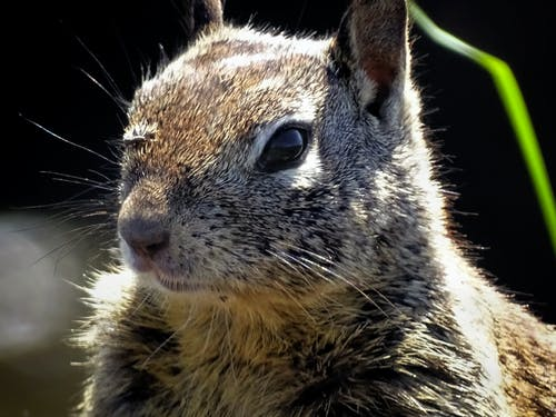 Close-up Photo of Squirrel Head