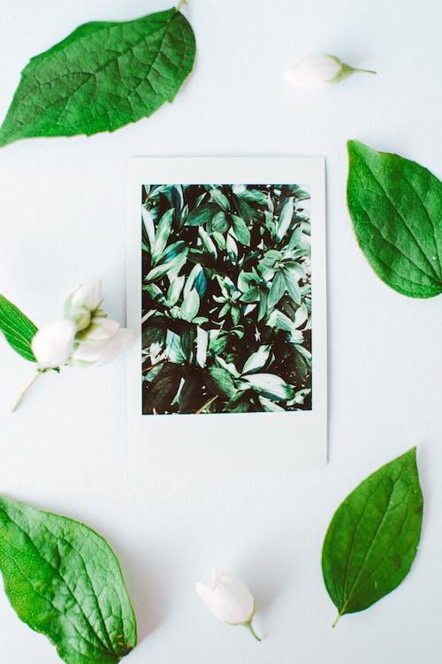aromático, aumento, botânico