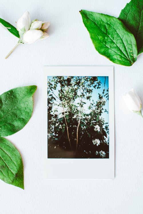 Photos gratuites de nature, photographie de film, polaroid