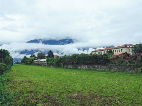 Fotos de stock gratuitas de arboles, césped, Italia, niebla