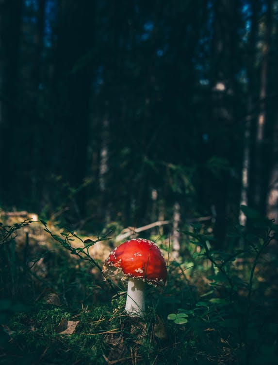 toadstool, αλέθω, άλεσμα