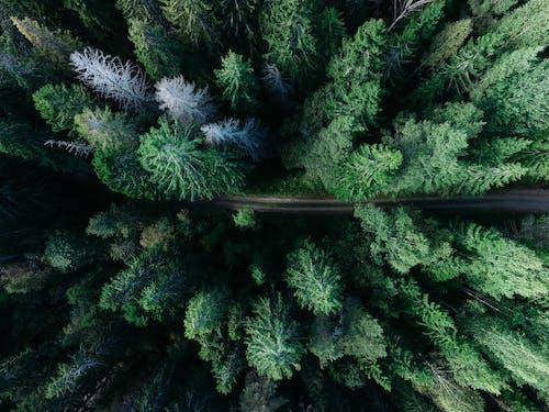Foto profissional grátis de aéreo, ao ar livre, árvores, atraente