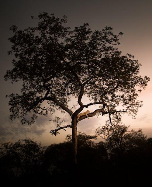 Foto profissional grátis de África do Sul, animais selvagens, animal, animal selvagem