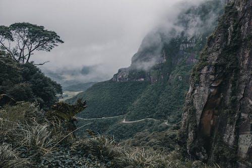 경치, 경치가 좋은, 나무, 녹색의 무료 스톡 사진