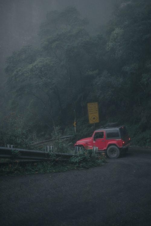 Ingyenes stockfotó 4x4, aszfalt, dzsip, fák témában